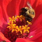 "Cole's Corner. Short Story. Part 2. ""Bees: the Search for the Silver Hive"""