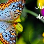 June's Arrival